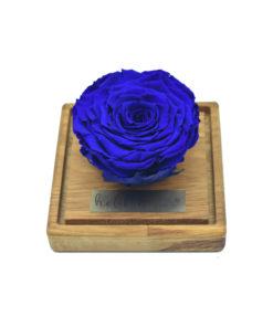 Royal blue king rose cvetni aranžman